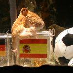 Jerman Cari Pengganti Paul Untuk Ramal Euro 2016